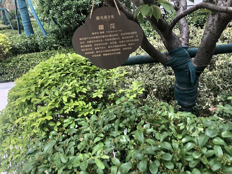 小区树铭牌