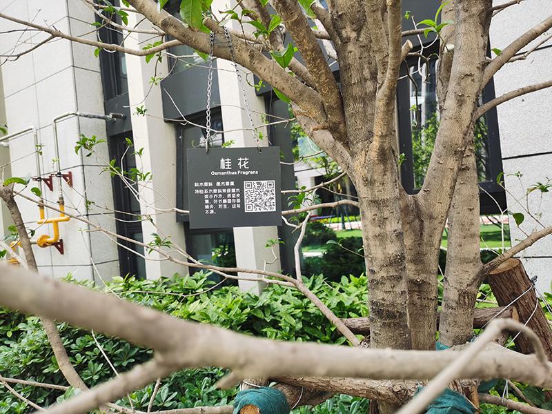 不锈钢树铭牌